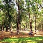 ryewood-park-150x150