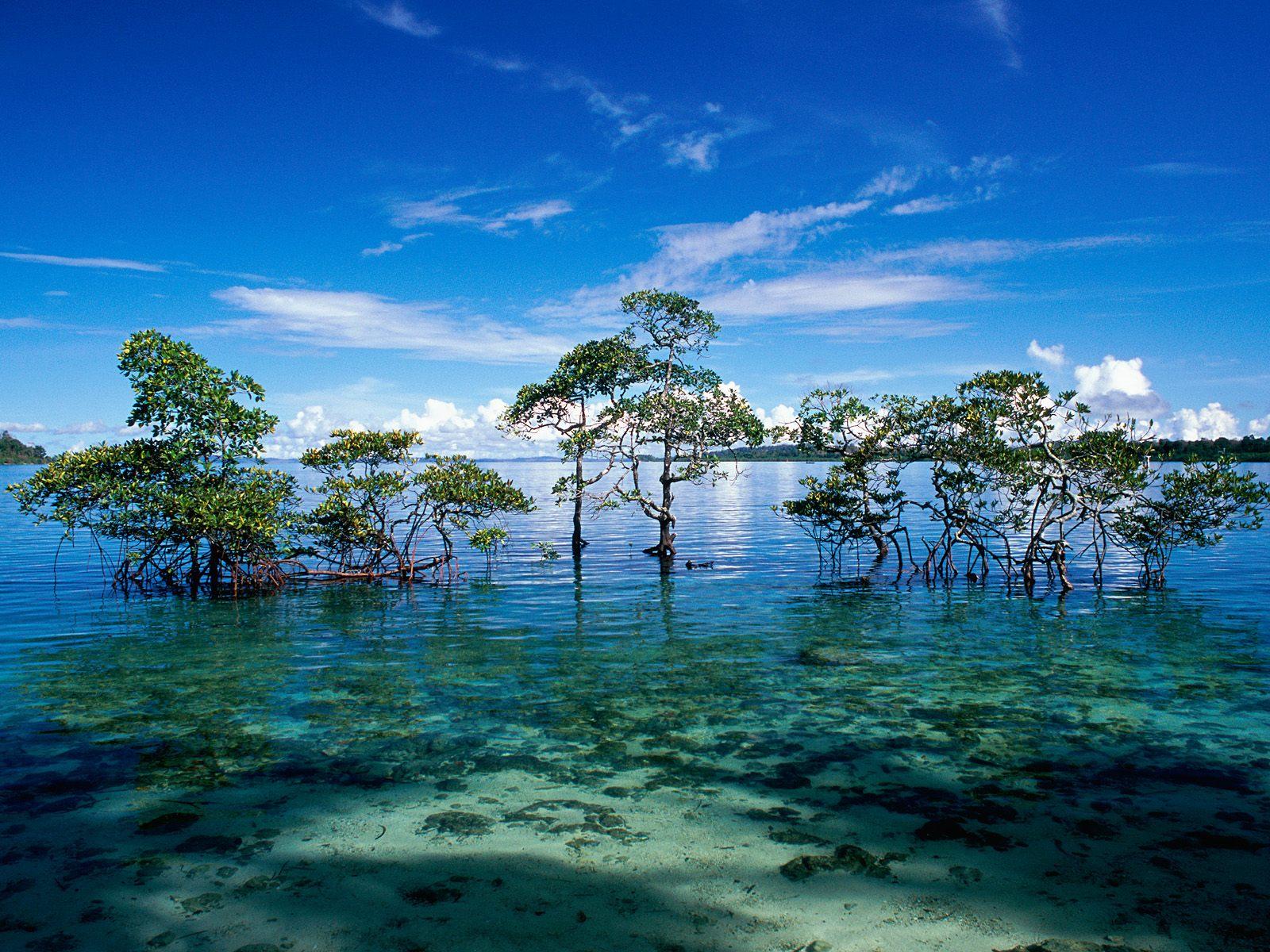 Havelock_Island__Andaman_and_Nicobar_Islands__India