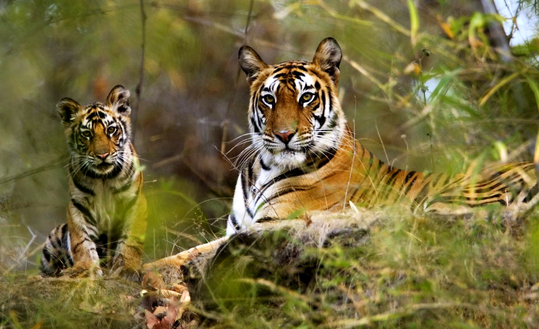 Bandhavgarh-National-Park