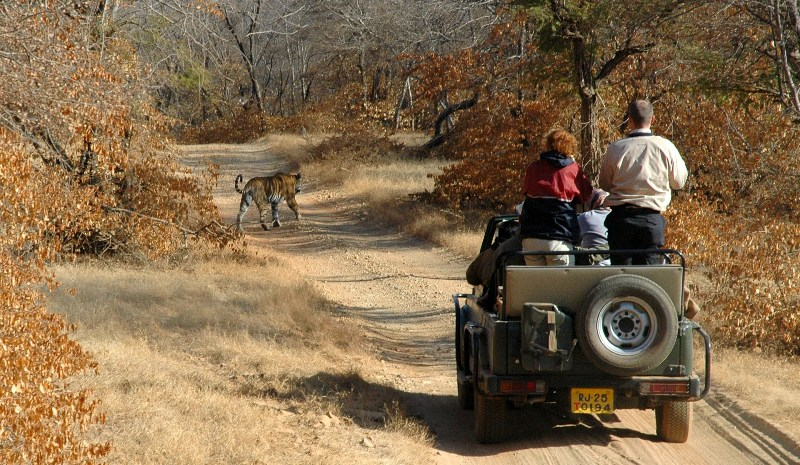 ranthambore-jeepsafari-big