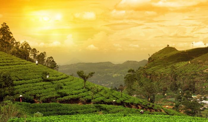Tea-Garden_Munnar