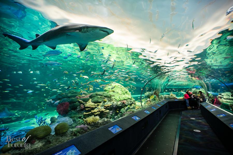 Ripley's Aquarium Of Canada - Trip Beam