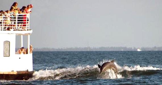 Dolphin Cruise Ride